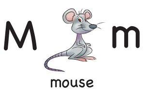 Карточка на английском mouse