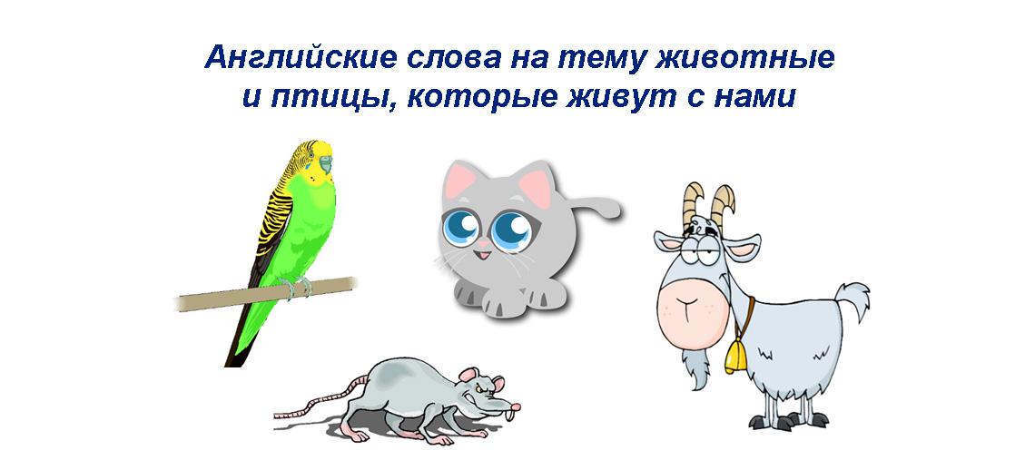 Английские слова на тему животные и птицы, которые живут рядом с нами