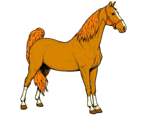 Лошадь по-английски - a horse
