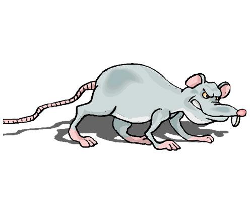 Крыса по-английски - a rat