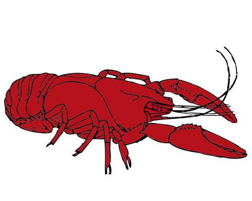 Раки по английски -crayfish