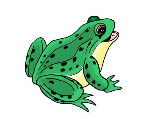 a frog croaks - лягушка квакает - to croak [krəʊk] - квакать