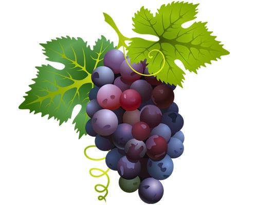 Гроздь винограда по-английски - a bunch of grapes