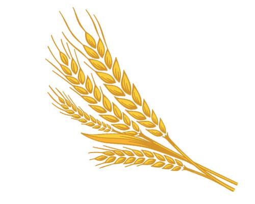 Колос пшеницы по-английски - an ear of wheat
